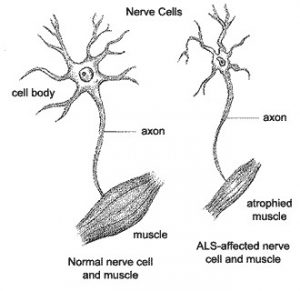 ela neurona